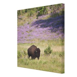 USA, South Dakota, American bison (Bison bison) 2 Canvas Print