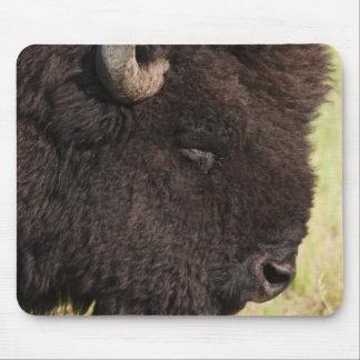 USA, South Dakota, American bison (Bison bison) 2 Mouse Pad