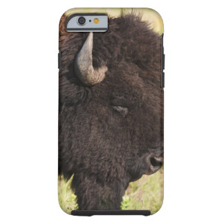 USA, South Dakota, American bison (Bison bison) 2 Tough iPhone 6 Case