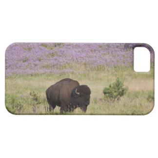 USA, South Dakota, American bison (Bison bison) iPhone SE/5/5s Case