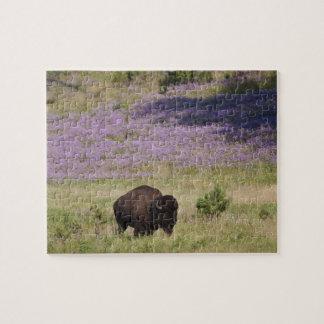 USA, South Dakota, American bison (Bison bison) Jigsaw Puzzle
