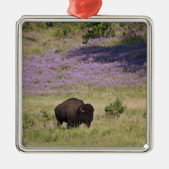 USA, South Dakota, American bison (Bison bison) Metal Ornament