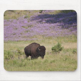 USA, South Dakota, American bison (Bison bison) Mouse Pad