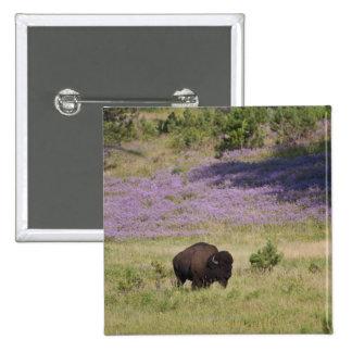 USA, South Dakota, American bison (Bison bison) Pinback Button