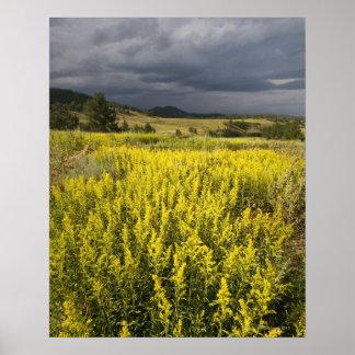 USA, South Dakota, Flowers and storm Poster