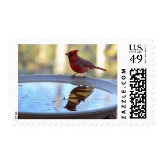 USA, Tennessee, Athens. Backyard Bird Bath 2 Postage