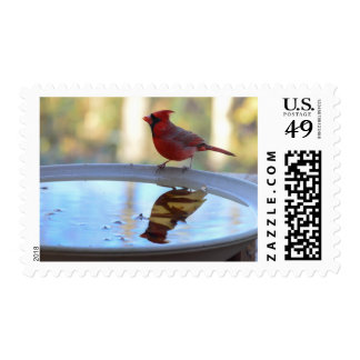 USA, Tennessee, Athens. Backyard Bird Bath 2 Postage Stamp