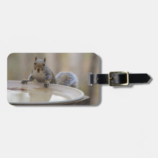 USA, Tennessee, Athens. Backyard Bird Bath Bag Tag