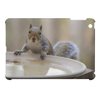 USA, Tennessee, Athens. Backyard Bird Bath iPad Mini Cover
