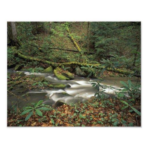 USA, Tennessee. Big South Fork National River Photo Print