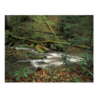 USA, Tennessee. Big South Fork National River Postcard