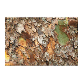 USA, Tennessee, Close Up Of Bark On A Tree Canvas Print