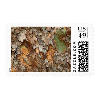 USA, Tennessee, Close Up Of Bark On A Tree Postage Stamp