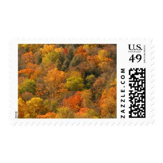 USA, Tennessee. Fall Foliage 2 Postage