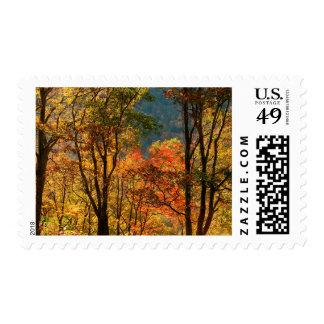USA, Tennessee. Fall Foliage Postage