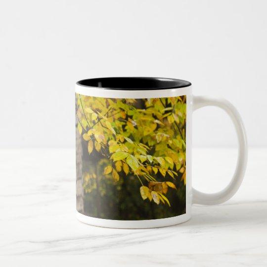 USA, Tennessee, Gatlinburg. Great Smoky Two-Tone Coffee Mug