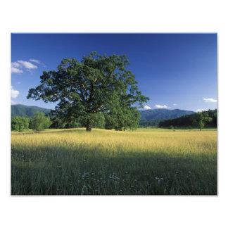 USA, Tennessee. Great Smokey Mountains 2 Photo Print
