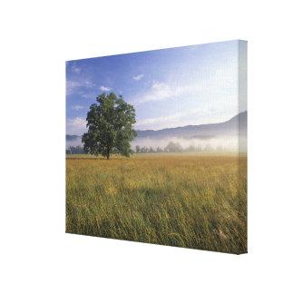 USA, Tennessee. Great Smokey Mountains 3 Canvas Print