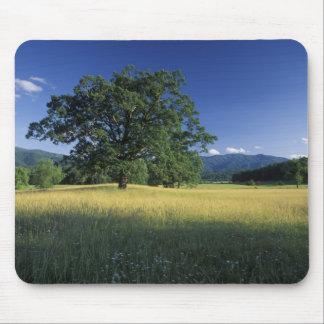 USA, Tennessee. Great Smokey Mountains 3 Mousepad
