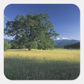 USA, Tennessee. Great Smokey Mountains 3 Square Sticker