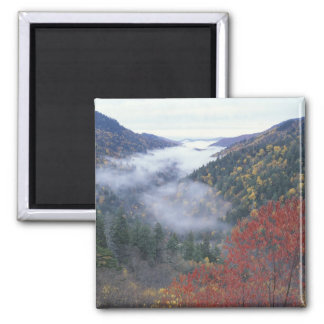 USA, Tennessee, Great Smokey Mountains National 2 Inch Square Magnet