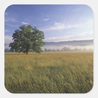USA, Tennessee. Great Smokey Mountains Square Sticker