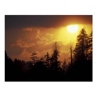 USA, Tennessee, Great Smoky Mountains NP. 2 Postcard