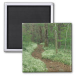 USA, Tennessee, Great Smoky Mountains NP, 3 2 Inch Square Magnet