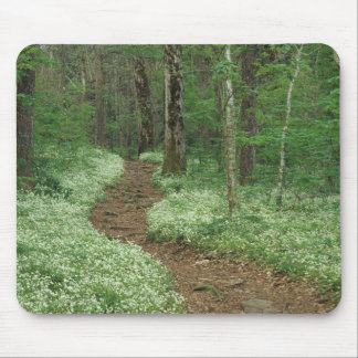 USA, Tennessee, Great Smoky Mountains NP, 3 Mouse Pad