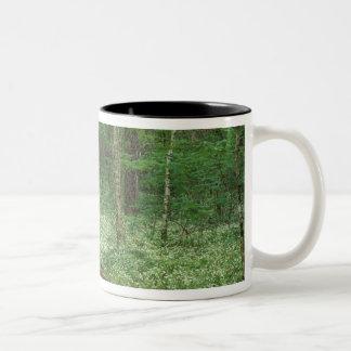 USA, Tennessee, Great Smoky Mountains NP, 3 Two-Tone Coffee Mug