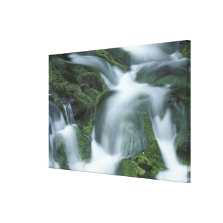 USA, Tennessee, Great Smoky Mountains NP. Stretched Canvas Print