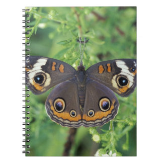 USA, Tennessee, Great Smoky Mountains NP. Notebook