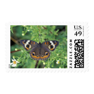 USA, Tennessee, Great Smoky Mountains NP. Postage