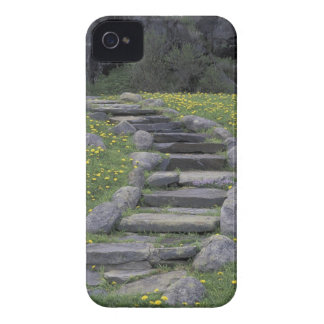 USA, Tennessee, Great Smoky Mountains NP. Stone Case-Mate iPhone 4 Cases