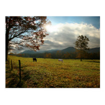USA, Tennessee. Horses In Cades Cove Valley Postcard