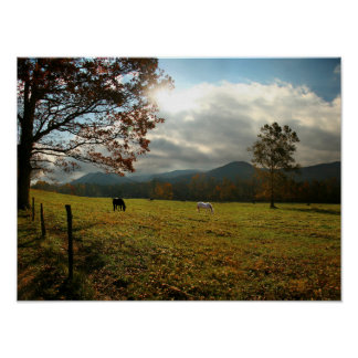 USA, Tennessee. Horses In Cades Cove Valley Poster