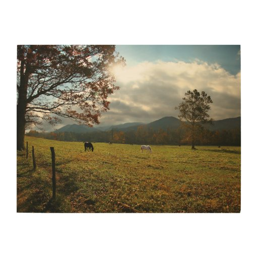Usa Tennessee Horses In Cades Cove Valley Wood Print