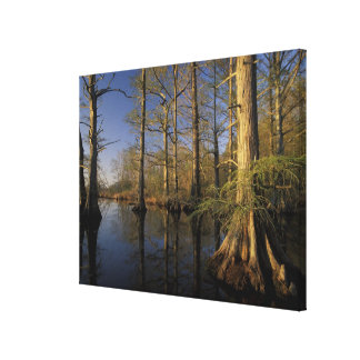 USA, Tennessee. Reelfoot National Wildlife Canvas Print