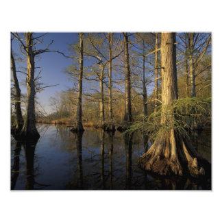USA, Tennessee. Reelfoot National Wildlife Photo Print