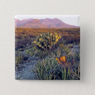 USA, Texas, Big Bend NP. A sandy pink dusk Button