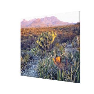 USA, Texas, Big Bend NP. A sandy pink dusk Canvas Print