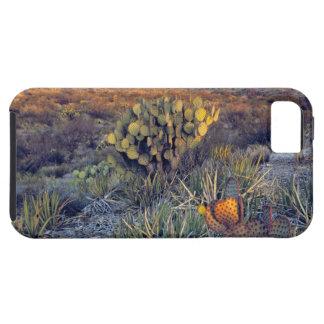 USA, Texas, Big Bend NP. A sandy pink dusk iPhone SE/5/5s Case