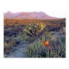 USA, Texas, Big Bend NP. A sandy pink dusk Postcard