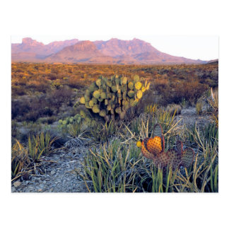 USA, Texas, Big Bend NP. A sandy pink dusk Postcard