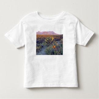 USA, Texas, Big Bend NP. A sandy pink dusk Toddler T-shirt