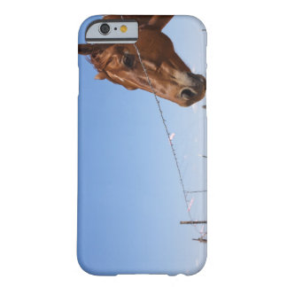 USA, Texas, Chillicothe, Horse stands beside Barely There iPhone 6 Case