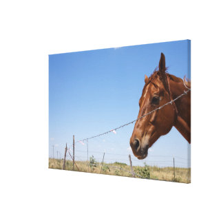 USA, Texas, Chillicothe, Horse stands beside Canvas Print