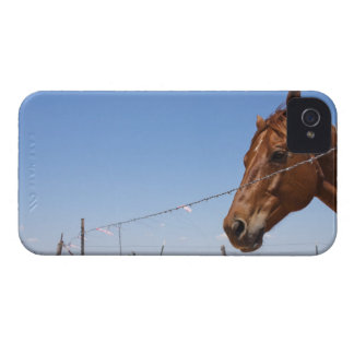 USA, Texas, Chillicothe, Horse stands beside iPhone 4 Case-Mate Case