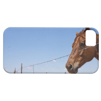 USA, Texas, Chillicothe, Horse stands beside iPhone SE/5/5s Case