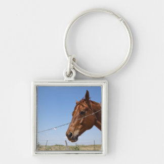 USA, Texas, Chillicothe, Horse stands beside Keychain